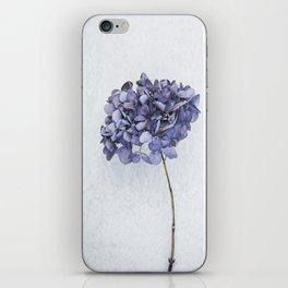 Dried Blue Hydrangea iPhone Skin