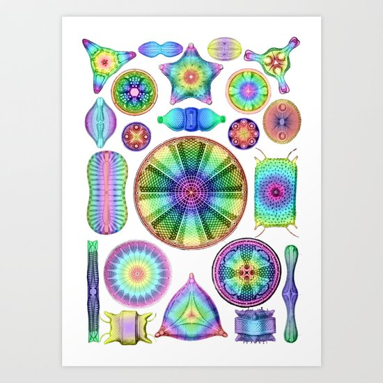 Ernst Haeckel Rainbow Diatoms by snaphappyscientist