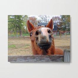 Smiling Horse Metal Print