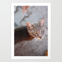 Photograph of a Grey Cat with Green eyes Shot in Bodrum, Turkey Art Print