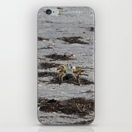 Competing Crabs iPhone Skin