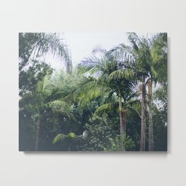 Palm Trees in a Tropical Garden Metal Print