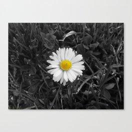 The Lone Daisy. Canvas Print