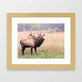 Bugling Elk Framed Art Print