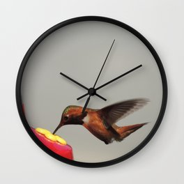 Rufous in for a Quick Lunch Wall Clock