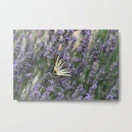 Papilio Machaon Metal Print