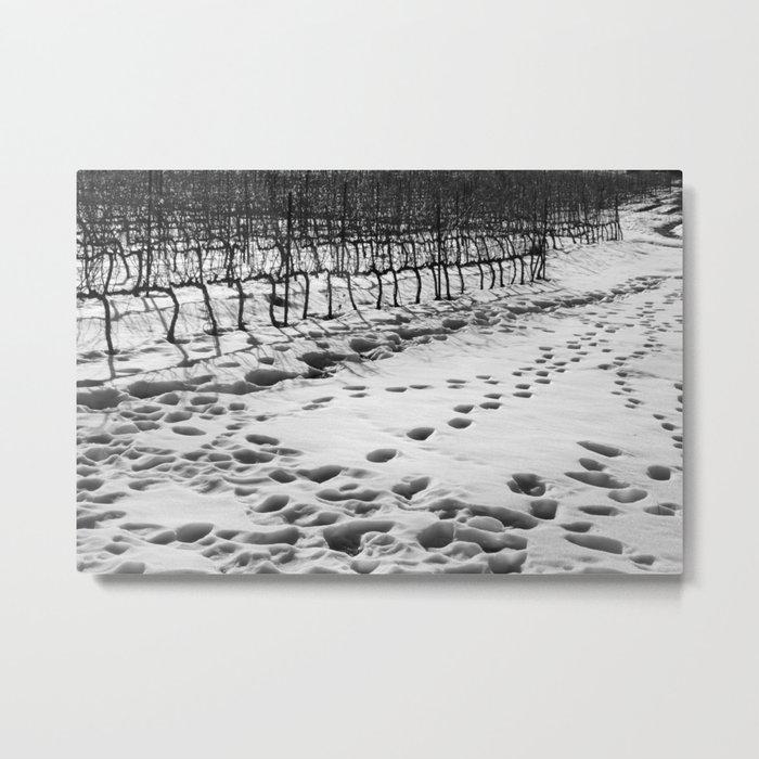 Snowy Vineyard Metal Print