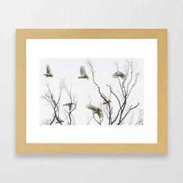 Birds of Australia Framed Art Print