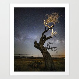 The Crooked Tree Art Print