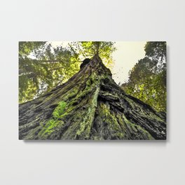 The Moss & The Tree Metal Print