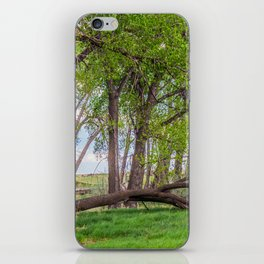Cottonwoods at Lee's Farm 2 iPhone Skin
