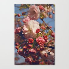 Blossoms in Beijing Canvas Print