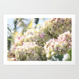 The Beauty of Summer Art Print
