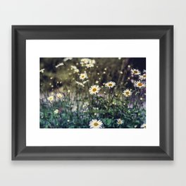 Daisy II Framed Art Print