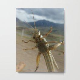 Gardner Grasshopper Metal Print