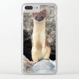 Long-Tailed Weasel on Lookout Clear iPhone Case