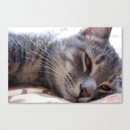 Sleepy Kitty Canvas Print