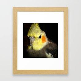 Cockatiel Portrait Framed Art Print