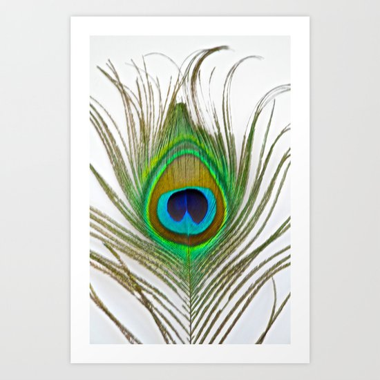 Peacock Feather on white Art Print