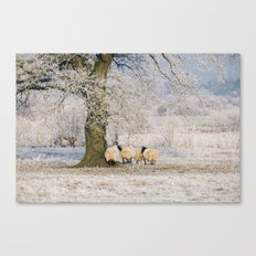 Sheep gathered under a tree covered in a thick hoar frost. Norfolk, UK. Canvas Print