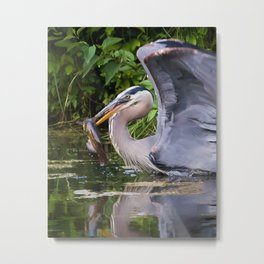 Heron and bullhead take-off Metal Print