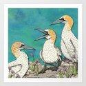 Gannets by lottibrown