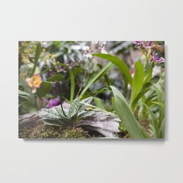 Dainty Orchid Metal Print