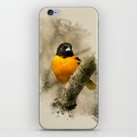 baltimore iPhone & iPod Skins featuring Baltimore Oriole Watercolor Painting by Christina Rollo