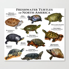Freshwater Turtles of North America Canvas Print