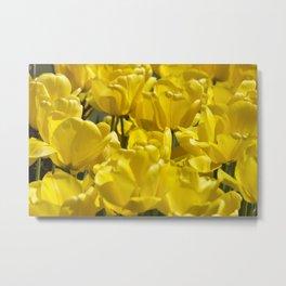 Darwin Hybrid Tulips Metal Print