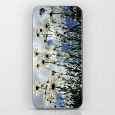 Marguerites iPhone & iPod Skin