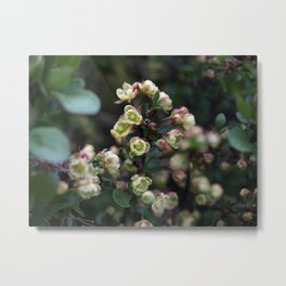 TINY FLOWERS OF A BERBERIS Metal Print