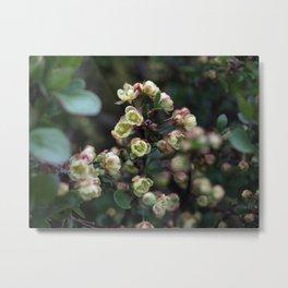 TINY FLOWERS OF A BERBERIS Metal Print