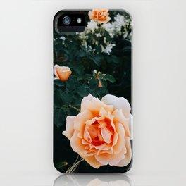 Summer Lovin' iPhone Case