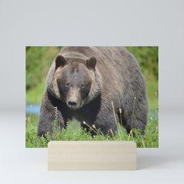 Brown Bear - Alaska Mini Art Print