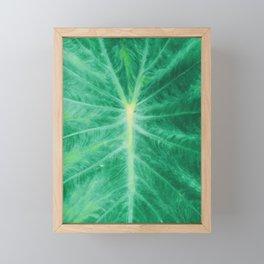 Colocasia Esculenta Framed Mini Art Print