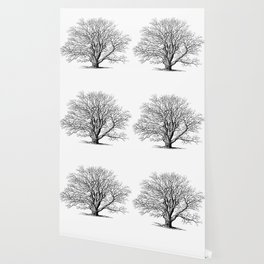 oak tree botanical no2 Wallpaper
