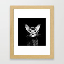 Abyssinian cat portrait black and white Framed Art Print