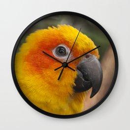 Sun conure parrot Wall Clock