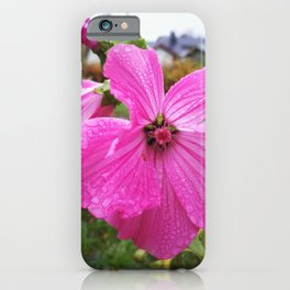 Lavatera flower with water drops in the morning iPhone Case