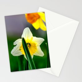 White and yellow daffodils Stationery Cards