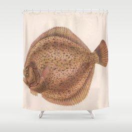 Vintage Flounder Fish Illustration (1919) Shower Curtain