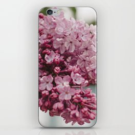 Spring Lilacs iPhone Skin