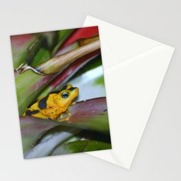 Panamanian Golden Frog Stationery Cards