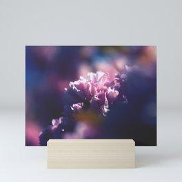 Sakura Six - Pink Cherry Blossoms Mini Art Print
