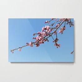 Pink Cherry Tree Branch Metal Print