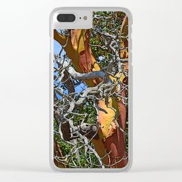MADRONA TREE DEAD OR ALIVE Clear iPhone Case