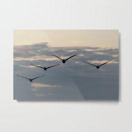 Pelicans Flying Metal Print