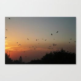 migrating birds Canvas Print