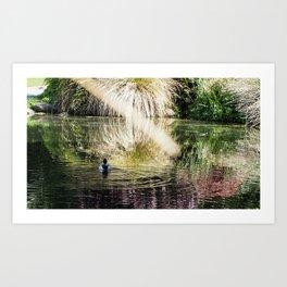 Swimming Duck Art Print